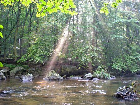 Sunbeams through woods Stok Fotoğraf