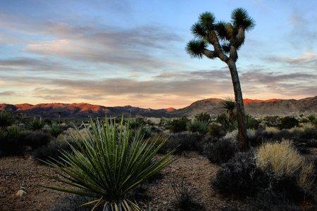 Sunrise in Joshua Tree National Park photo