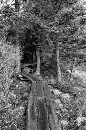 boardwalk trail: Hiking Trail boardwalk through woods Stock Photo