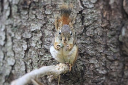 tree dweller: A squirrel eating a nut