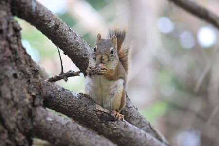tree dweller: A little squirrel on a branch