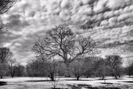 bleak: B and W of a bleak winter with tree and clouds Stock Photo