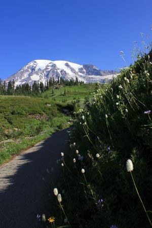 rainier: Mt  Rainier with flowers