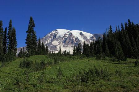 mt rainier: Mt Rainier and Alpine meadow Stock Photo
