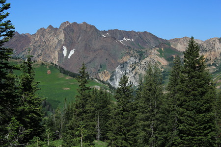 wasatch: Mountains and green trees