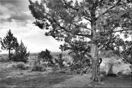 juniper tree: Tent with Juniper tree in Black and white