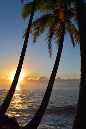 oasis at sunrise: Sunrise with palm trees in foreground Stock Photo