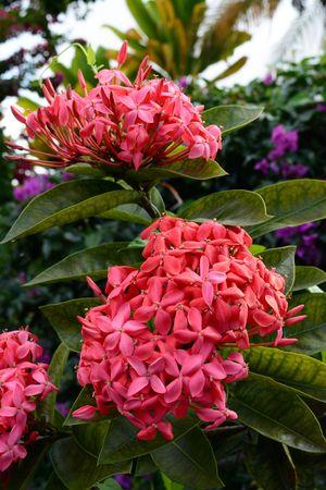 Blühender Baum Mit Weißen Blüten Lizenzfreie Fotos, Bilder Und Stock ...