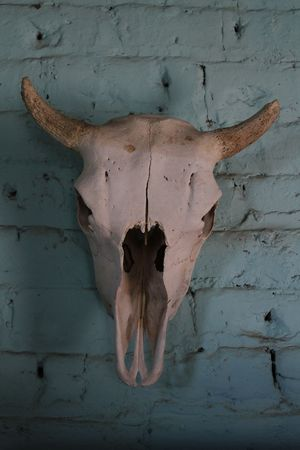 cow skull: Cow skull wall hanging