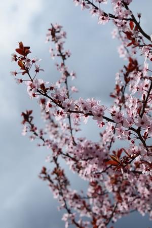 springtime: Springtime flowers, pink Stock Photo