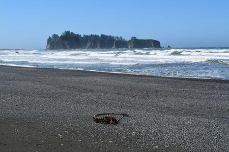 alga marina: Algas en una playa