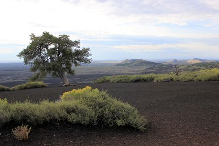 lava field: Lone tree with view of Lava field
