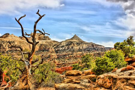 rocky mountain juniper: Dead Juniper with rock formations in background Stock Photo