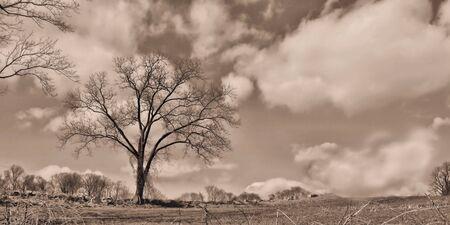 Sepia of large tree and farmland