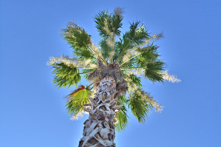 looking up at a palm tree with blue sky