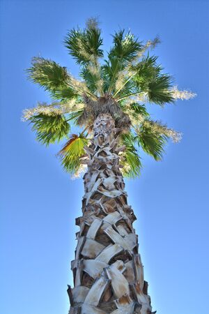 Portrait looking up at a palm tree