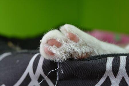 A cats paw Reklamní fotografie