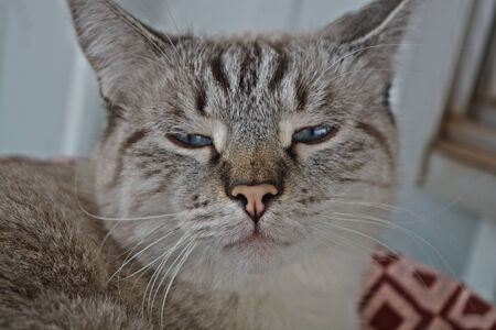 Tabby cat looking forward with his eyes 12 closed Reklamní fotografie