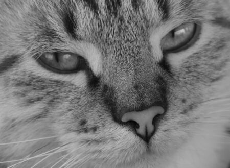 black and white macro of the face of a Tabby cat
