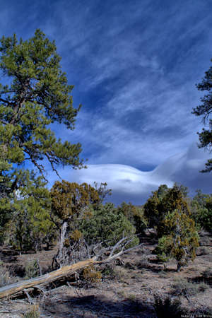 Clouds and blue sky and pine tree