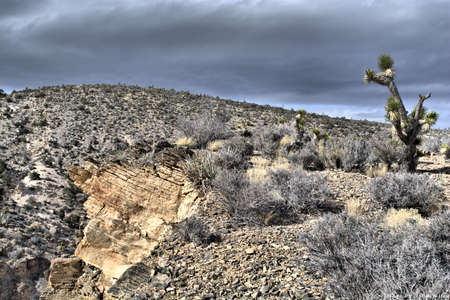 Joshua tree with a dark cloudy skies and rock