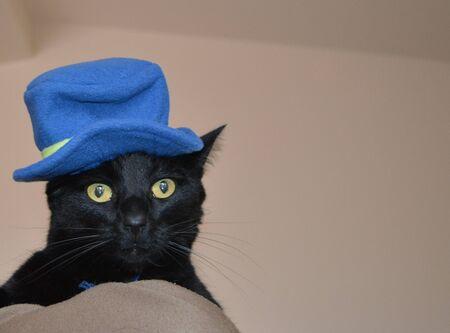 Black cat wearing a blue hat