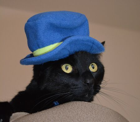 Black cat wearing blue hat Reklamní fotografie