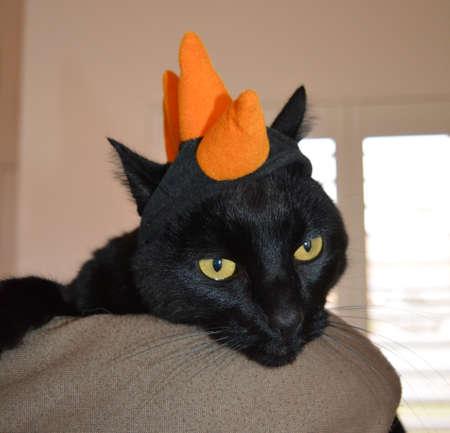 Black cat wearing orange dinosaur hat Reklamní fotografie