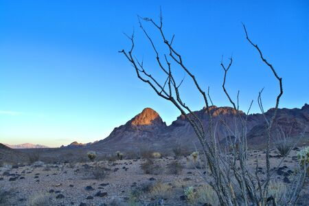 Ocotillo in foreground with mountain semi-lit in background