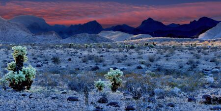 Dawn over cholla and desert in foreground with pink skies