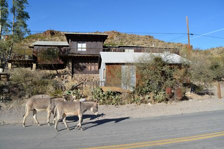 Donkeys walking down the street with shacks behind them