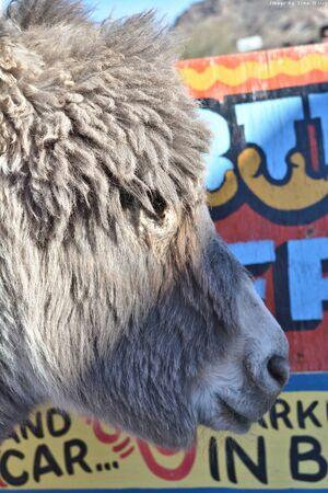 Side profile of a Burro
