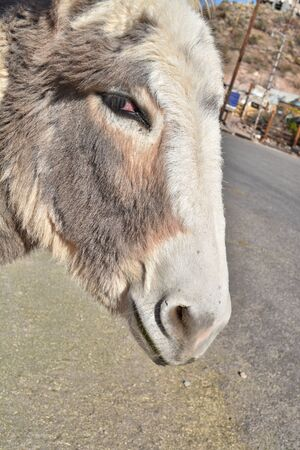 Face of a burro looking at the camera from the side Reklamní fotografie