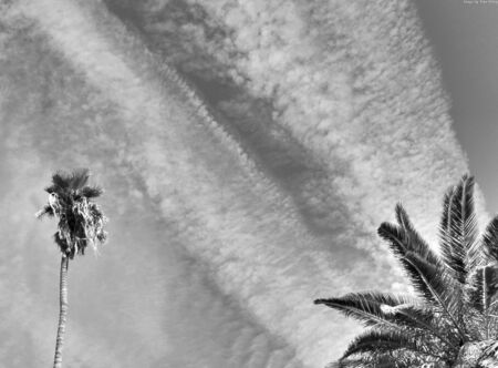 Palm tree, clouds and palm leaves in black and white Reklamní fotografie