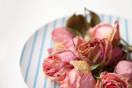 Beautiful tender dry roses on a plate background