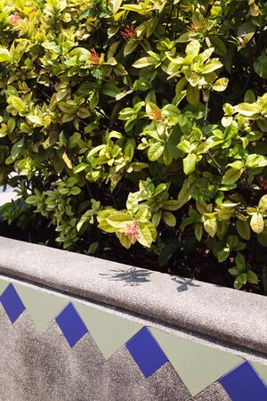 flowerbed: Green bush in a decorated concrete flowerbed