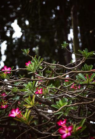 Schöne Blühende Zweige Mit Rosa Blumen Neben Weißes Gebäude ...