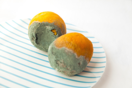 Two rotten oranges covered with blue mold. Beautiful spoiled food: citrus fruit on a plate. Shallow focus Stock Photo