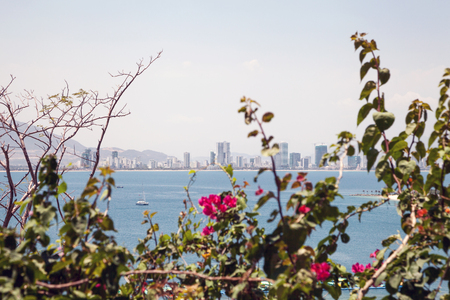 Asian city Nha Trang skyline over the green branches with pink flowers. Vietnamese town beautiful cityscape over water