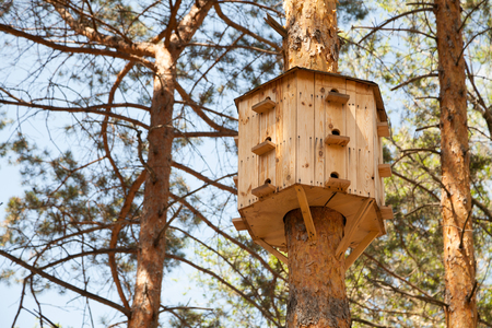 Big birdhouse with many windows on a tree. Bird multifamily condo in a park
