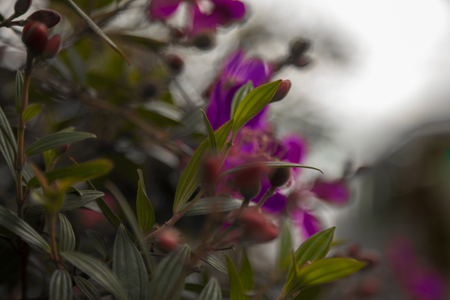 Blurry green leaves and purple flowers in the wind. Dark beautiful nature in the evening background