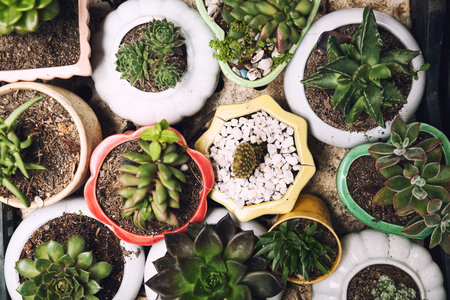 Cute little potted succulents top view background. Many small home plants in pots from above. Plenty of various succulent houseplants in an indoor garden