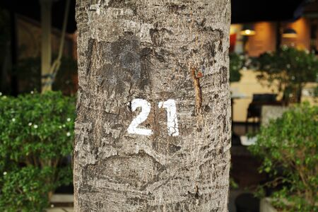 Number 21 written with white paint on a tree trunk. Inventory number twenty-one on a bark close-up