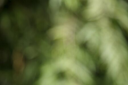 Lush green foliage blurred background with copy space. Defocused tree branches in a garden