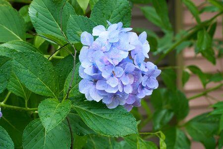 Close up shot of Blue flowers 版權商用圖片
