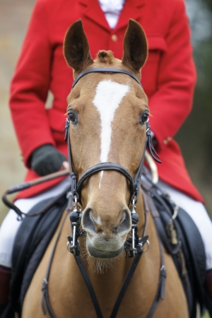 Front on head shot of a horse, the rider is wearing a hunting jacket