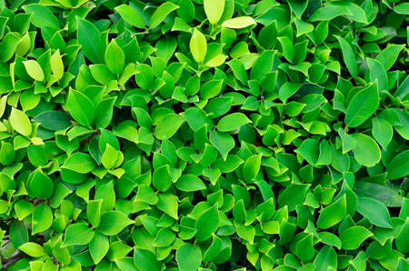 a texture of green plant Stock Photo - 12516589