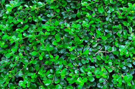 a texture of green plant photo