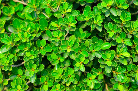 texture of green plant Stock Photo - 12753446
