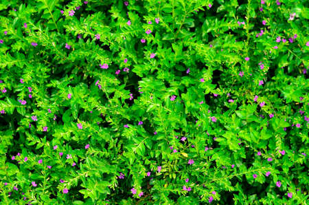 texture of green plant Stock Photo - 12753627